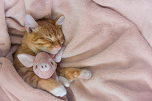 Red Cat Lies Resting Paw With ...