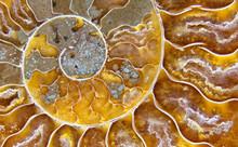 Closeup Macrophotograph Of A F...