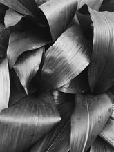 Palm Leaf Detail