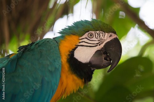 Parrot Ara in wildlife