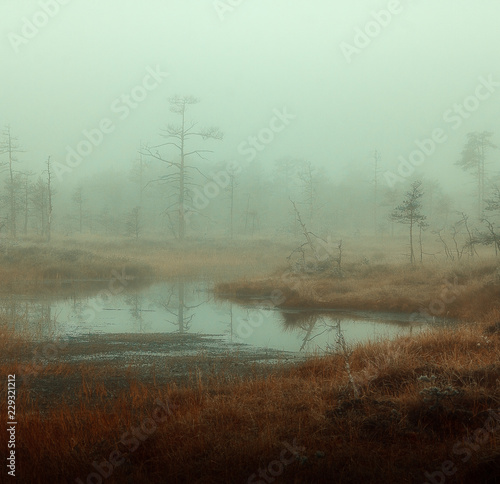 Fotografie, Obraz  autumn misty swamp