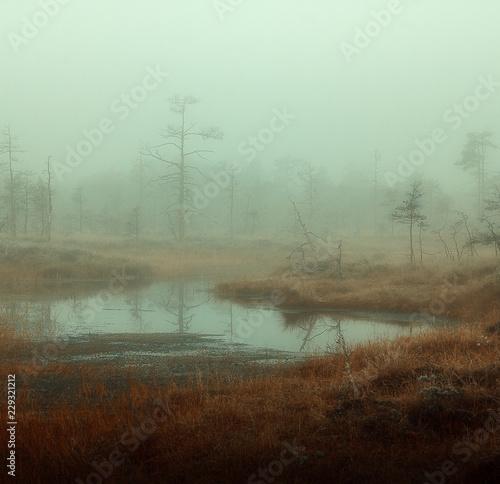 Tela autumn misty swamp