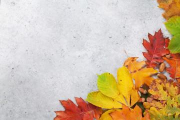 Fototapeta Autumn backdrop with colorful leaves
