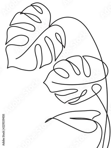 lisc-tropikalny-monstera-szkic