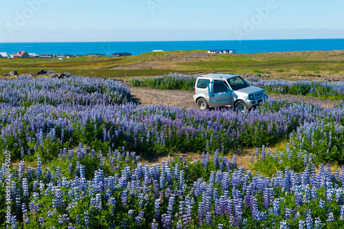 Vivid meadow and a offroad car