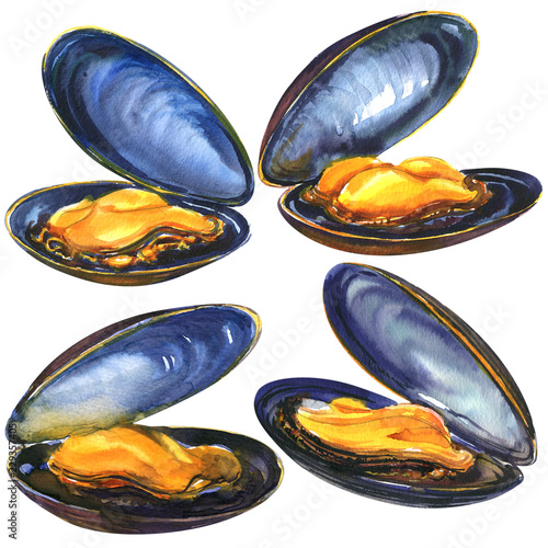 Valokuva  Appetizing four fresh sea blue mussels, set sea food isolated, hand drawn waterc