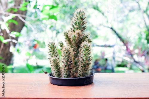 Spoed Foto op Canvas Cactus Small cactus in pot, succulents or cactus.