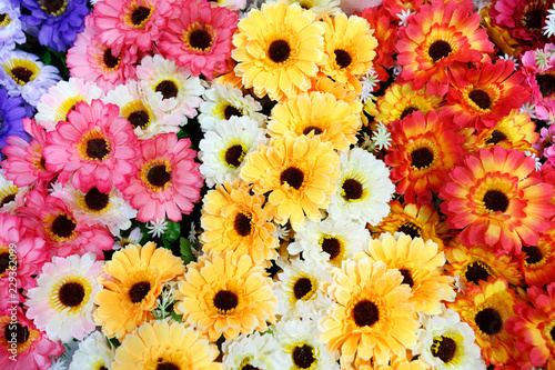 Gerbera flower rainbow background