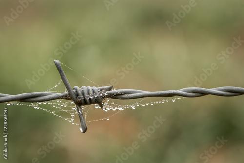 alambre de púas con telarañas y gotas de lluvia suspendidas Canvas Print