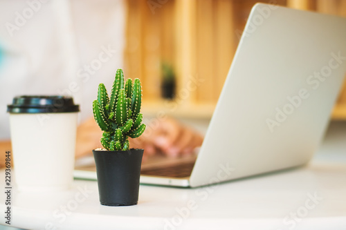 Fotografía  Cactus and women are using laptops.