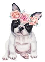 Cute French Bulldog Puppy In W...
