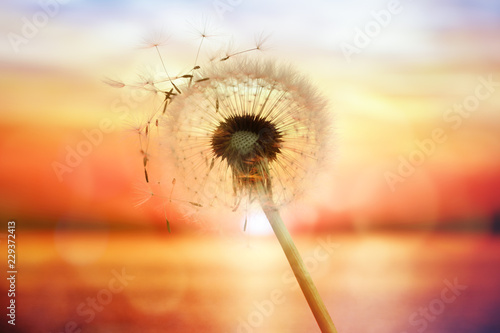 Foto auf Gartenposter Lowenzahn Dandelion silhouette against sunset over the sea