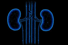 Healthy Kidneys Structure