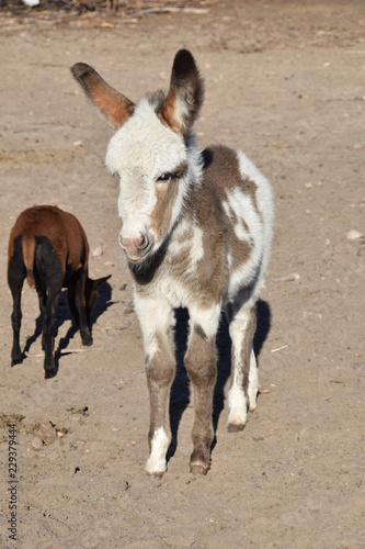 a small bumbling donkey in the yard