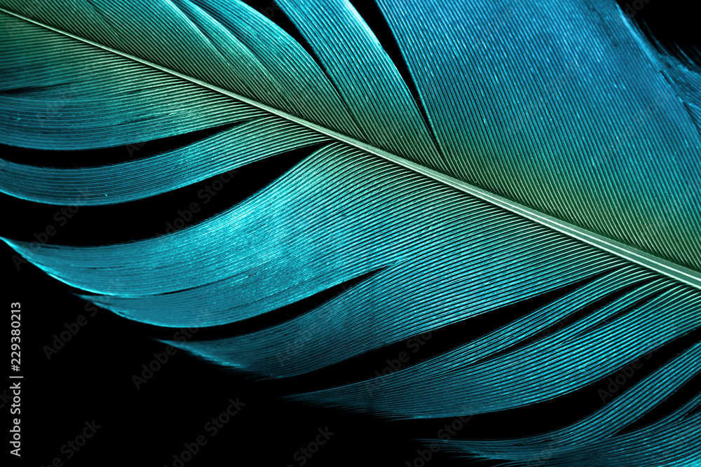 Fototapety, obrazy: close up blue feather textured surface background.