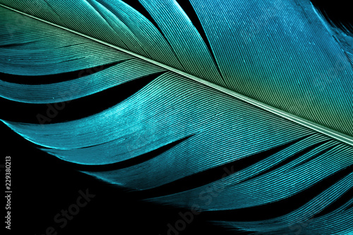 Photo  close up blue feather textured surface background.