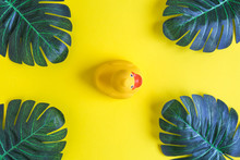 Top View Of Rubber Duck And Leaves Abstract Isolated On Yellow.
