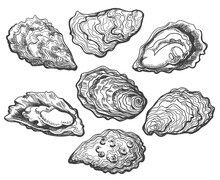 Oysters. Oyster Shell Vector S...