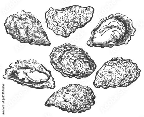 Fotografija Oysters