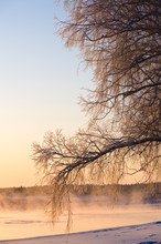 Frost Covered Tree Branches An...