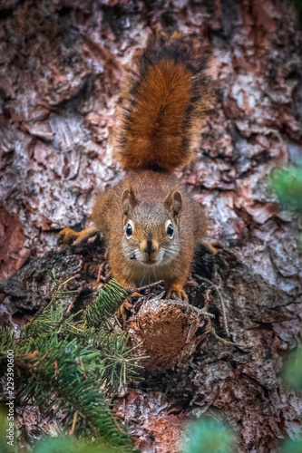 Printed kitchen splashbacks A curious squirrel at Swift Creek, Valemount, British Columbia, Canada