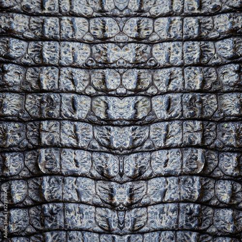 Closeup image of crocodile skin texture background