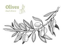 Olives, Hand Drawn Vector Illu...
