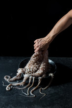 Crop Hand Holding Octopus Over...