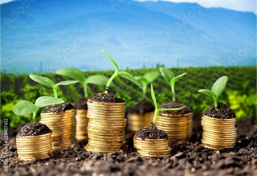 Coins in soil with young plants on