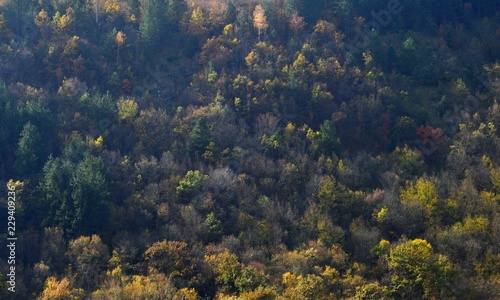 landscape in autumn