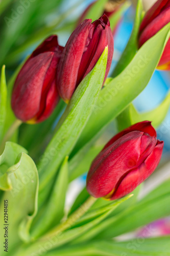 Spoed Foto op Canvas Tulp Bouquet of red tulip isolated on white background
