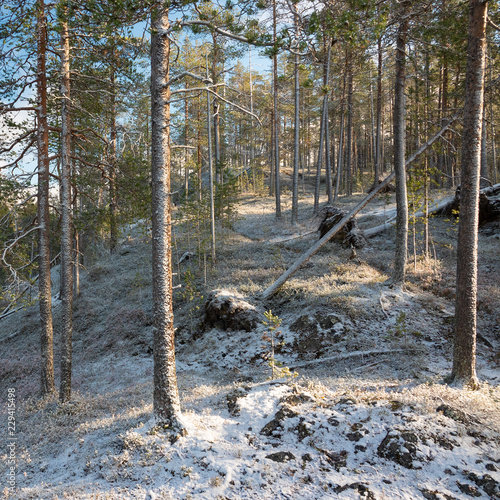 Fotografie, Obraz  First snow