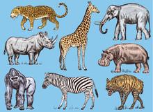 Set Of African Animals. Rhinoc...