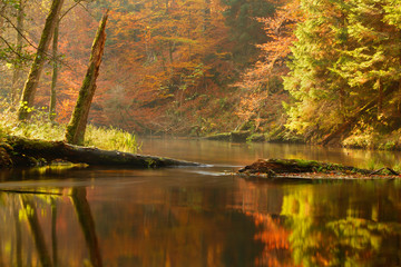 Brda river on Fall season./ Uncommonly beautiful Autumn nature with river, forest and misty sunlight in north Poland
