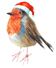 Merry Christmas Hatted Bird Gr...