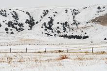 Winter Hilly Landscape Scene I...