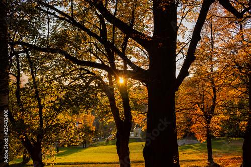 letni-krajobraz-kolorowy-letni-park-miejski-z-drzew-lisciastych-zieleni-przy-slonecznej-pogodzie