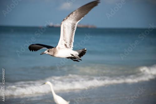 Poster Vogel bird, seagull