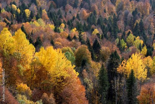 krajobraz-z-kolorowym-lasem-w-czasie-jesieni