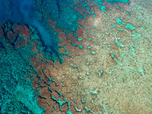 サンゴ礁の海 自然 海 ブルー