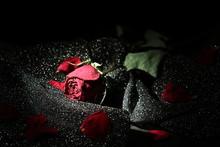 枯れた薔薇 Dead Rose 1