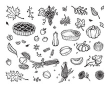 Vector Thanksgiving Icon Set. Food. Fruits, Vegetables And Berries. Autumn Harvest Symbols. Hand Drawn Doodle Apple Pie, Pumpkin Pie, Pumpkins, Corn, Grapes, Chestnuts, Apples, Leaves, Flowers