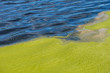 canvas print picture - water surface split in half by the green algae on the surface