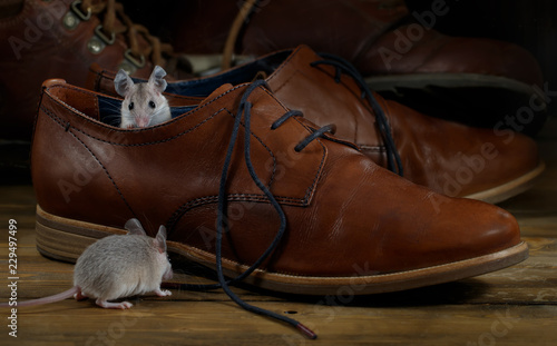 Close-up two mice and leather brown shoes on the wooden floors. Small DoF focus put only to mouse head.