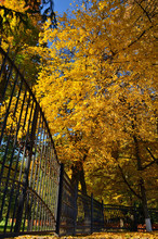 The Fence Of The City Park In The Autumn, Yellow Leaves On The Trees, Yellow Fallen Leaves On The Ground.