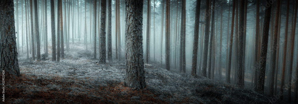 Fototapety, obrazy: autumn misty forest