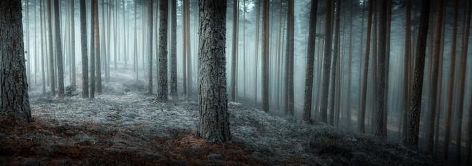 jesień mglisty las
