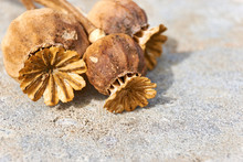 Close-up Of Dry Orange Brown Poppy Seed Pods On A Grey Stone Background With Selective Focus
