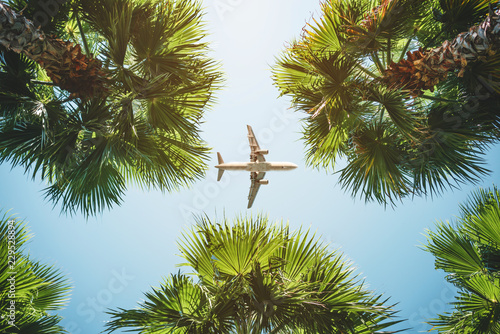 Poster Palmier airplane flight. tropical vacations.