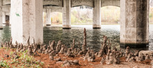 AUSTIN, TEXAS - DECEMBER 30, 2017: The Underside Of 1st Street Bridge Crossing Over Lady Bird Lake Featuring Various Sized Cypress Tree Knees Near The Shore.